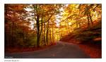 Autumn Road_7