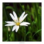 Flowers_66
