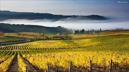 Autumn Tuscany Land by Marcello-Paoli