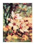 Spring_Peach_2