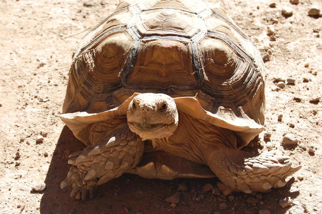 Sunbathing Tortoise by CrazyRabidPony