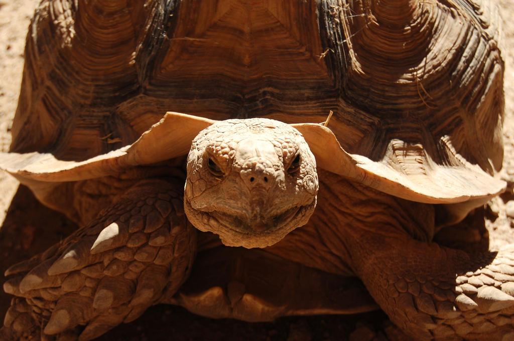 Sunbathing Tortoise II by CrazyRabidPony