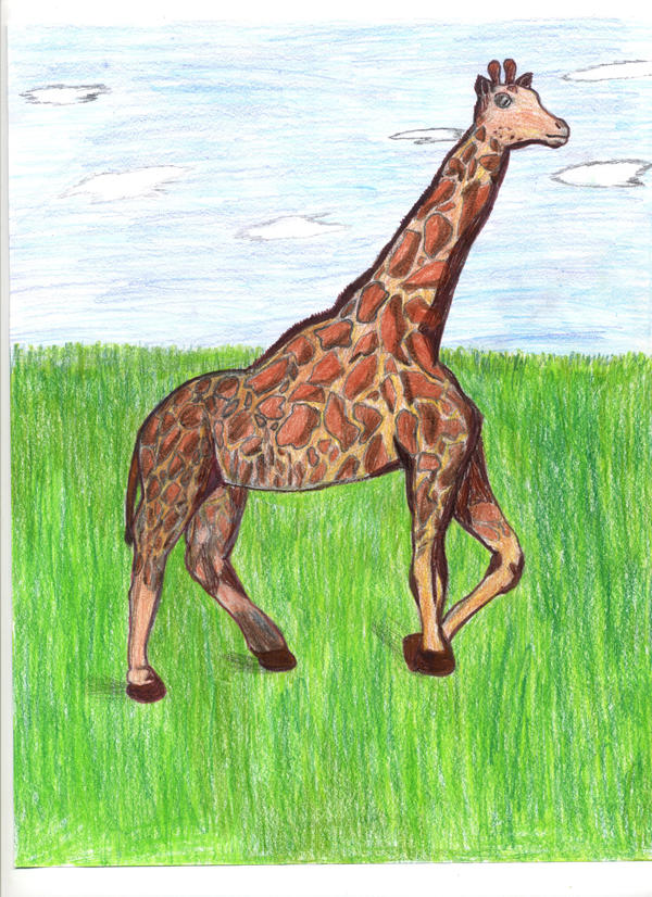 Giraffe by Elc54