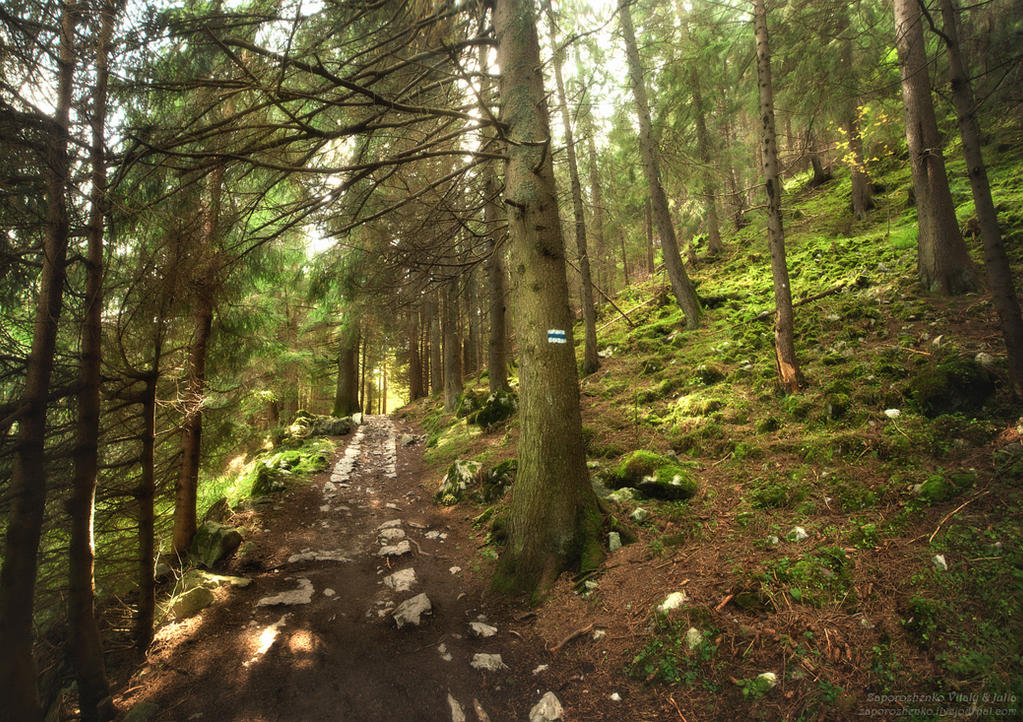 pamela is walking through a forest This forest visualization is a free relaxation script in which you imagine walking through a beautiful forest in the mountains use this script to record your own audio or learn to relax.