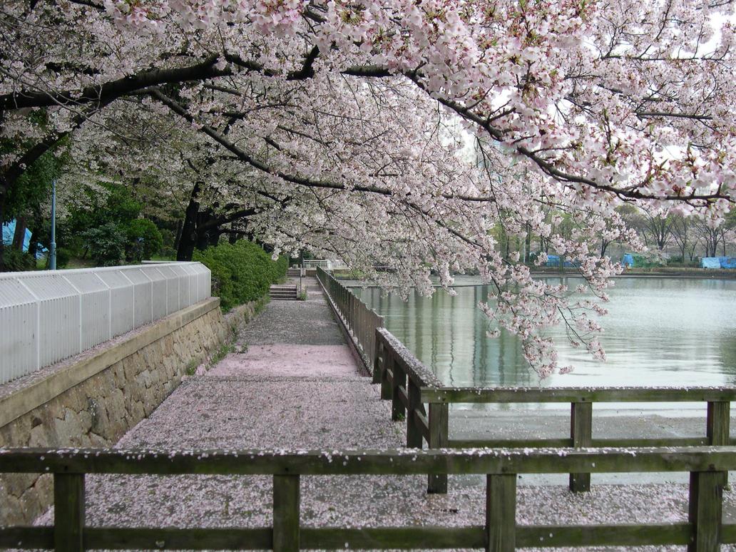 Sakura Trees In A Garden By Dlzagnar On Deviantart