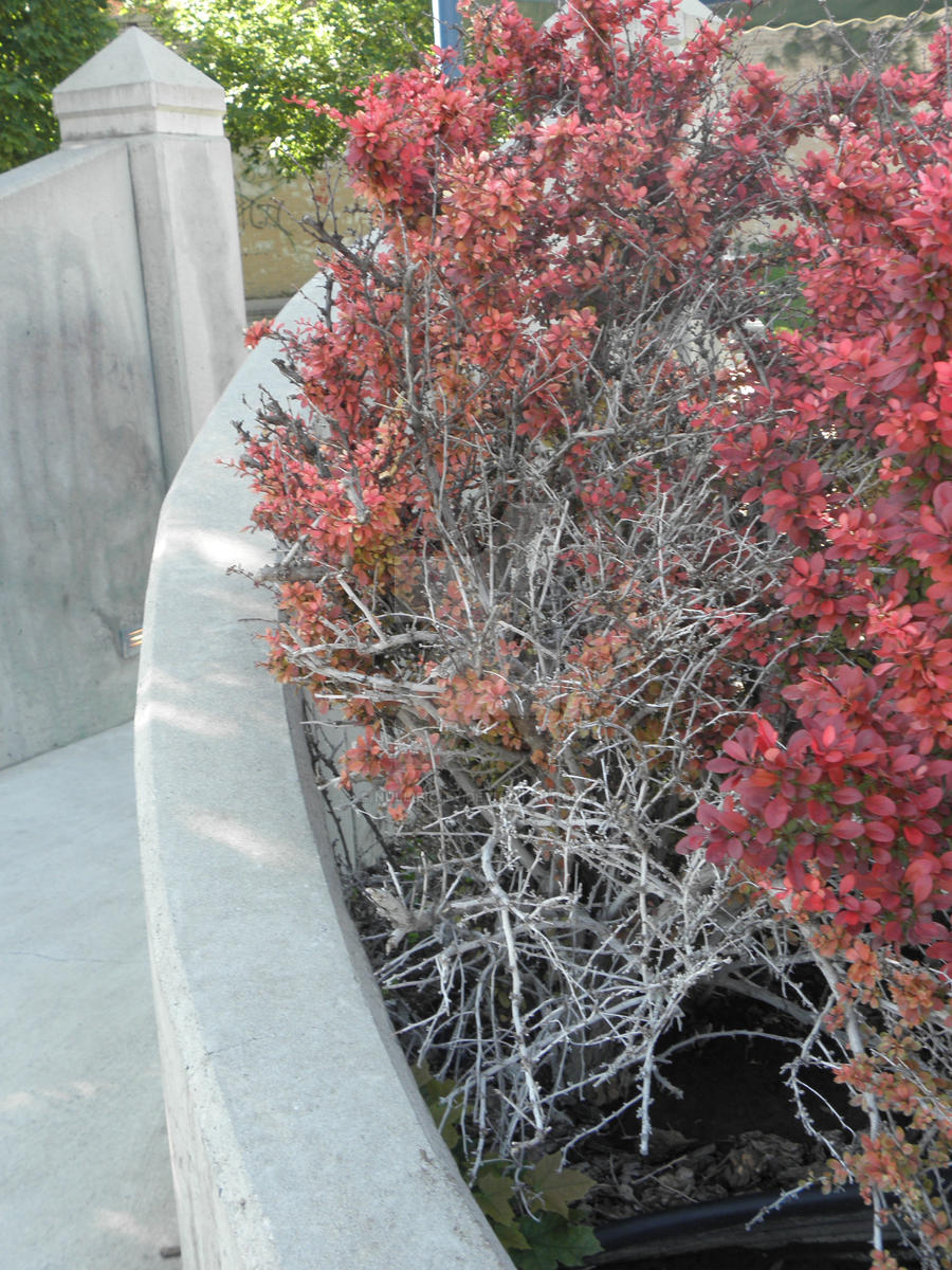 Concrete Garden by Nullibicity