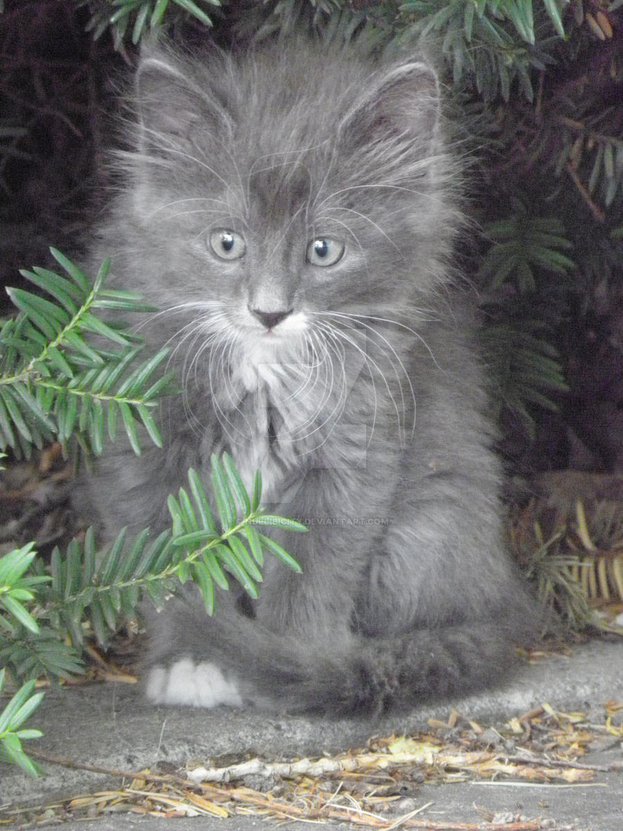 Little Kitty 2 by Nullibicity