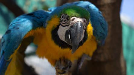 Parrot Mackaw Eyeing You by Jonson-Art