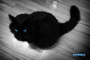 cat with the blue eyes by mrmevs
