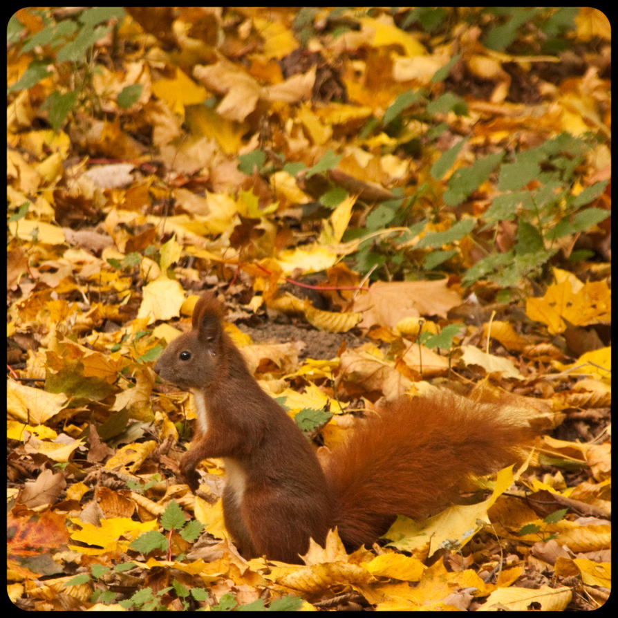 Tiergarten Squirrel by exosquelette