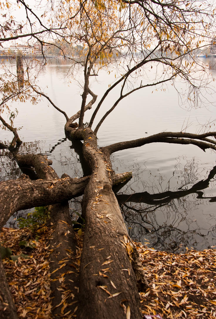 Fallen Tree by exosquelette