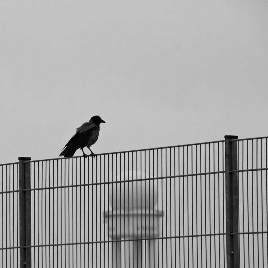 the berlin Raven by exosquelette