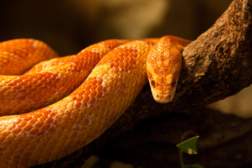 Yellow Snake by exosquelette