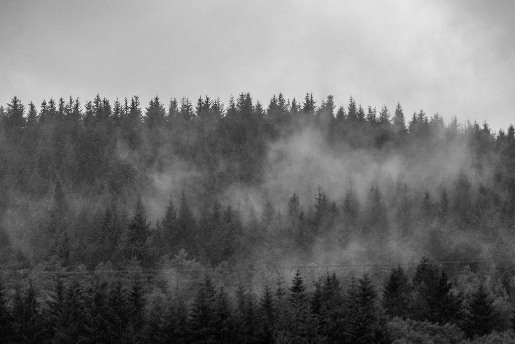Misty Mountain by exosquelette