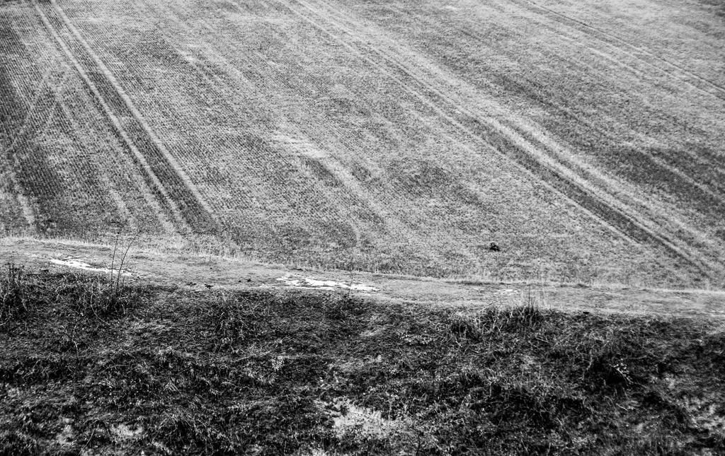 Grass Line by exosquelette