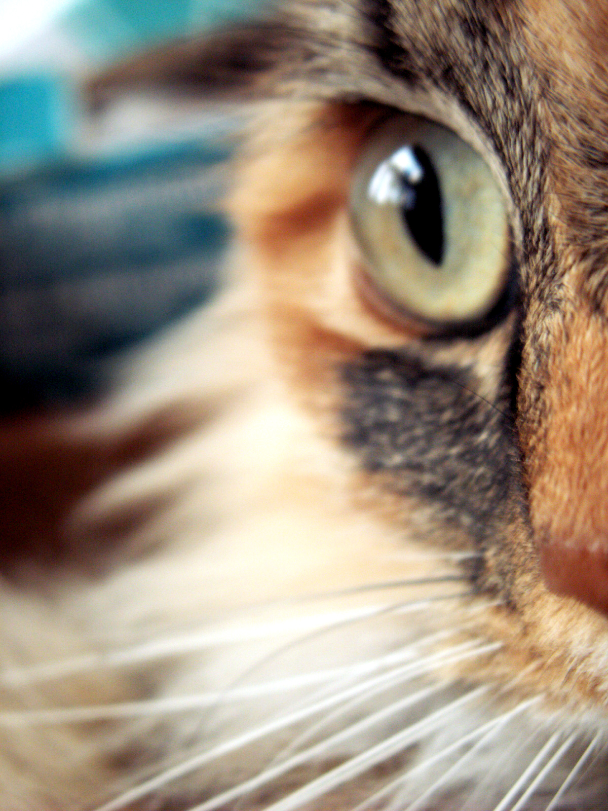 my cat by exosquelette