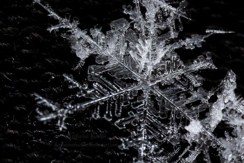 Winter's Crystals