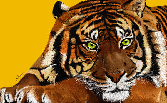 Tiger (MS Paint)