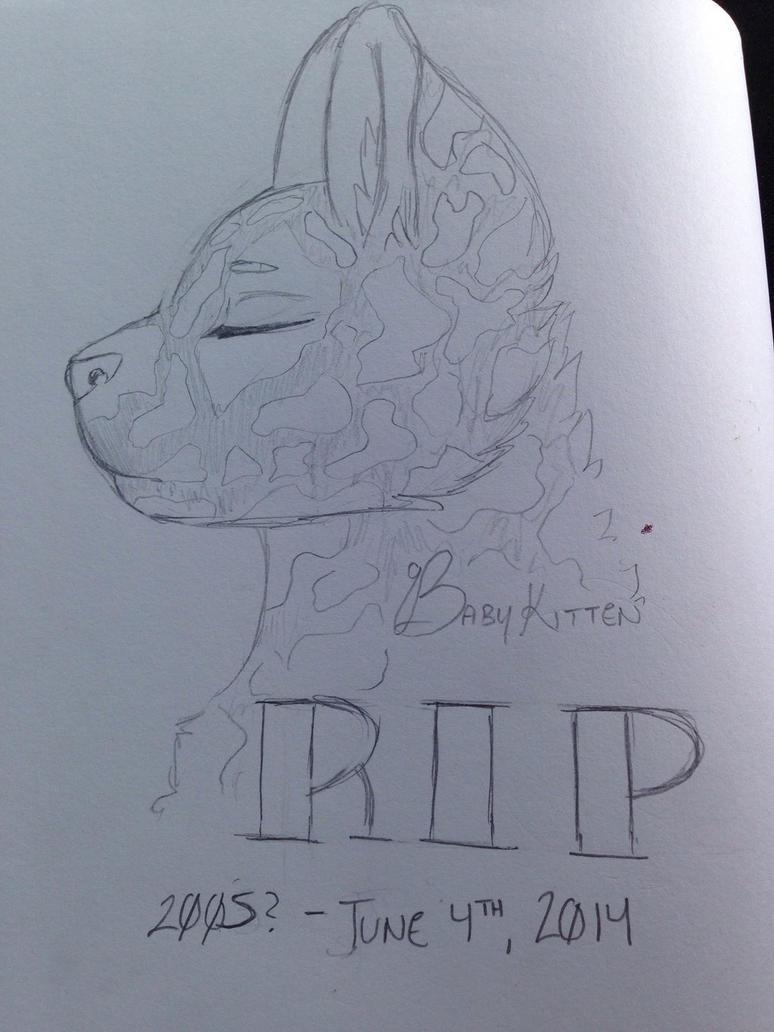 RIP Babykitten by WolfTheUmbreon