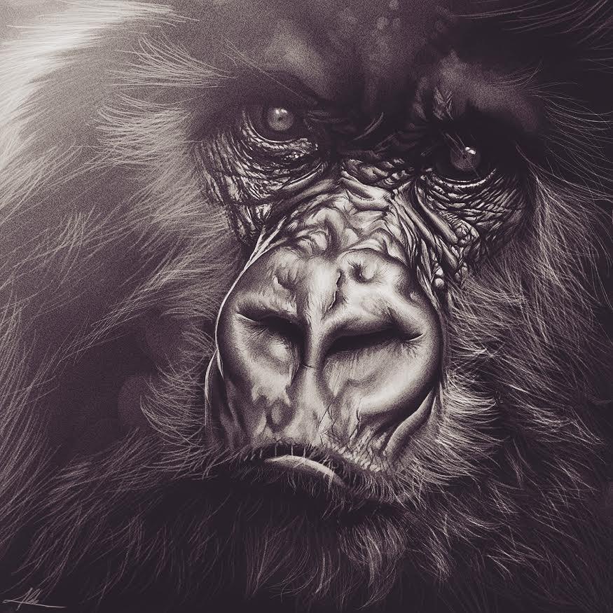 gorilla by Kromnz