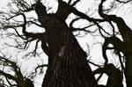 Baum by shishas