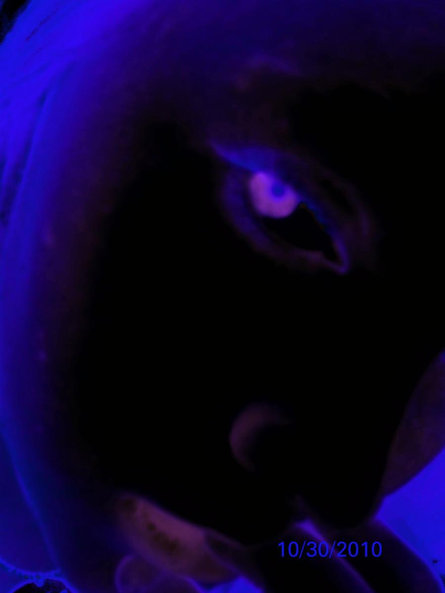 BlackPurple by Avey-Cee