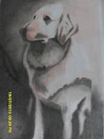 Waiting Dog by Ezequielmercado