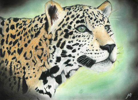A Jaguar's Curiosity