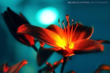 Fireflower - it's no plastic