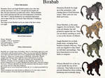 Birabab - Speices sheet