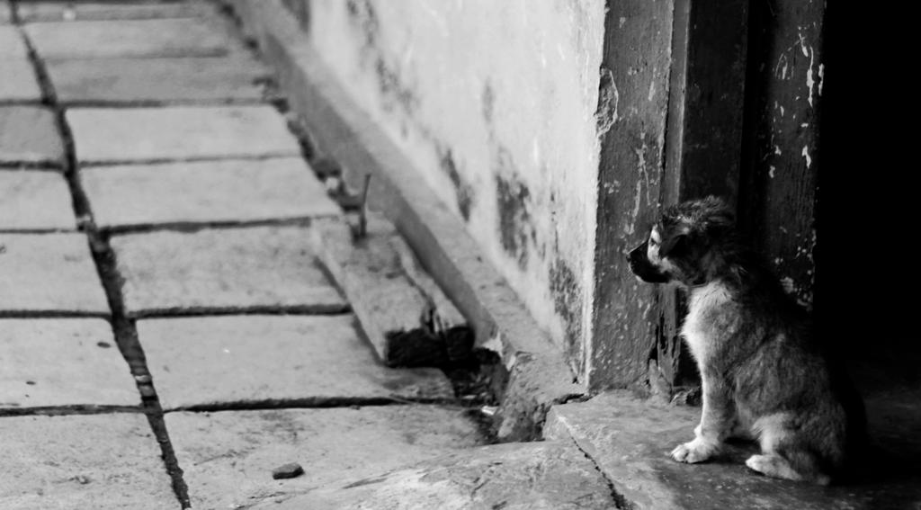 Dog by hcq