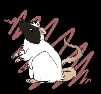 Rat by oceanshimmer