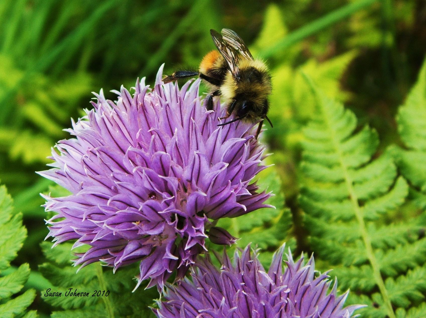 Busy Bee by AlaskaGrl