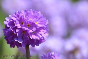 Purple Daze by AlaskaGrl