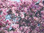 Oh My! A sea of Magnolia