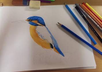 Kingfisher drawing by daniart-de