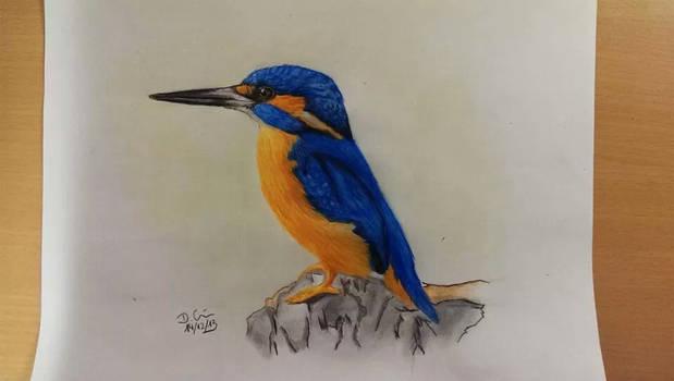 Kingfisher // Eisvogel by daniart-de