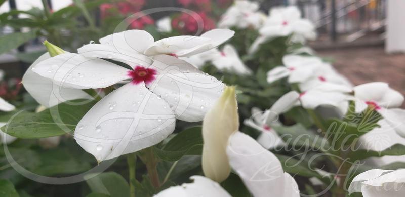 White Flower on a Rainy Day