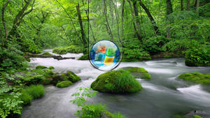 Green Windows 3 by donycorreia