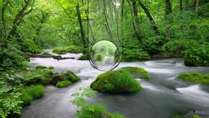 Green Windows 4 by donycorreia