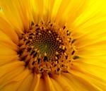 in the sunshine wonderland by dolce-vaniglia
