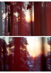 Views from my window 1
