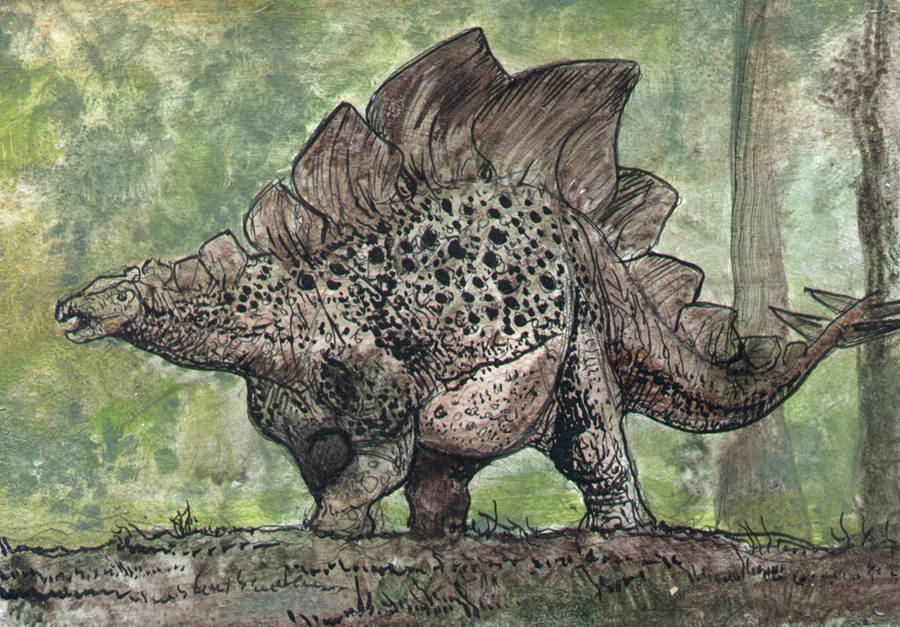 Brown Stegosaurus by Algoroth