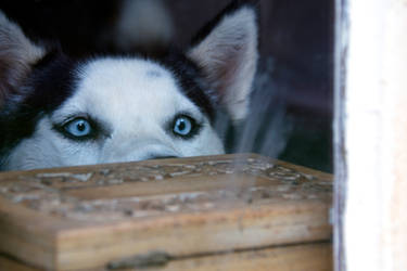 Peeking through the Window at you by Q-tipper