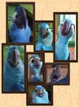 Blue spix macaw family portrait
