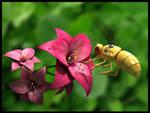 Abeja mecanica y flores