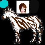 Amufu the zebra