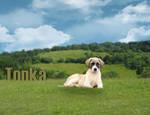 Tonka Puppy Manip