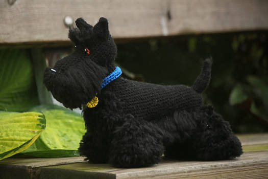 Buster the Scottish terrier