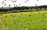 Birds Invasion